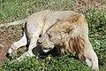 Ngorongoro 2012 05 30 2582 (7500983530).jpg