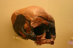 Barbara Harrisson - 'Deep Skull' (Homo sapiens skull from the Niah Great Cave)