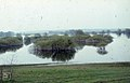 Night heron nesting islands. Willow. Lake Marchegg. Czech border (38312278551).jpg