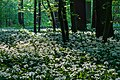 Nordkirchen, Naturschutzgebiet Ichterloh -- 2018 -- 2315.jpg