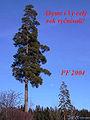 Novoročenka-2005.jpg
