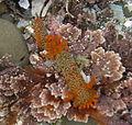 Nudibranch in tide pools 17.JPG