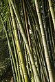 OASI DI NINFA bambù.JPG