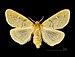 Ocneria rubea MHNT.CUT.2012.0.357 Monteils (Gard) Female Dos.jpg