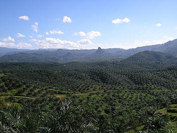View of palm oil plantation in Cigudeg, Bogor