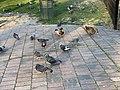 Oiseaux Parc Hôtel Ville Fontenay Bois 7.jpg