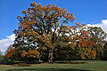 Old oak tree in Florham Park NJ.jpg