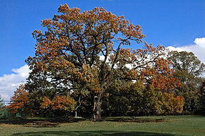 Florham Park, New Jersey - 200-year-old oak tree at Brooklake Country Club in Florham Park, New Jersey