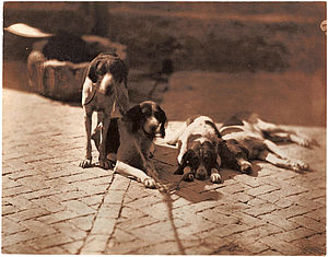 Olympe Aguado - Hunting Dogs