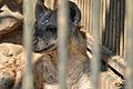 Omiya park zoo 010.jpg