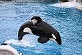 Orca-2650649 960 720.jpg