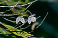 Orchid (Id ?) (14137001354).jpg