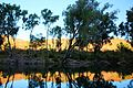 Ord River reflection.jpg