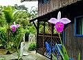 Orquídeas en Ladrilleros.jpg