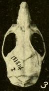 Skull, seen from above