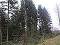 Ostenfeld bei Husum 09.jpg