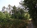 Přírodní park Škvorecká obora-Králičina - lesy východně od sídliště Rohožník a severně od Květnické studánky (1).JPG