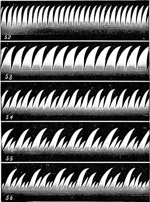 PSM V14 D085 Tonal sound variations on a candle flame.jpg