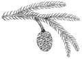 PSM V67 D473 Sequoia reichenbachi.png