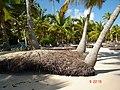 PUNTA CANA, REPUBLICA DOMINICANA, BARCELO BAVARO HOTEL - panoramio.jpg