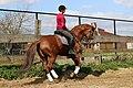 Paard in de piste 01.jpg
