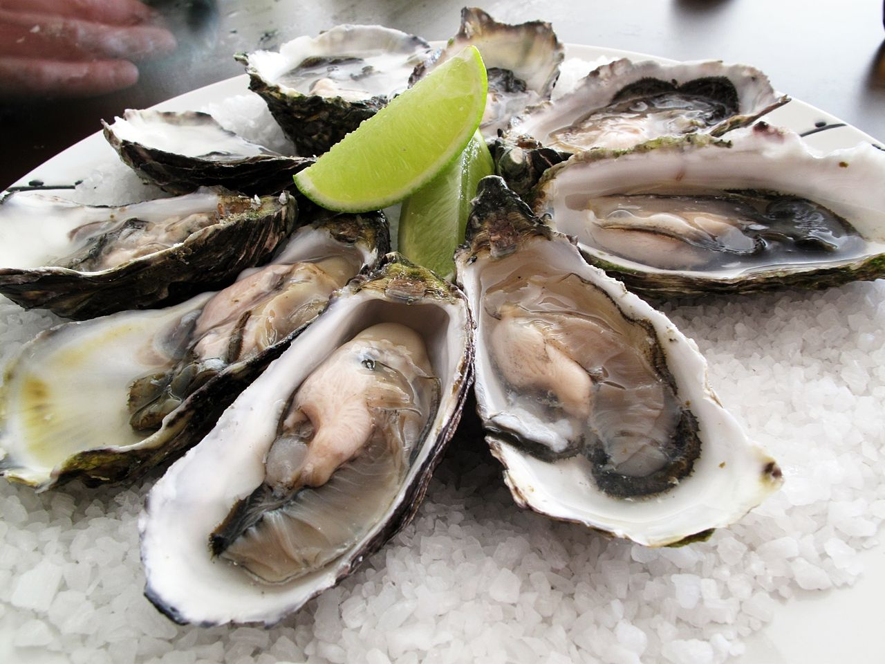 The Daily Vampire 7 Words In Turkish 6 Of 7 Oysters