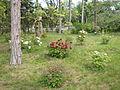 Paeonia suffruticosa in Odessa botanical garden.jpg