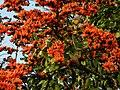 Palash Tree.jpg