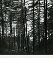 Paolo Monti - Servizio fotografico - BEIC 6340977.jpg