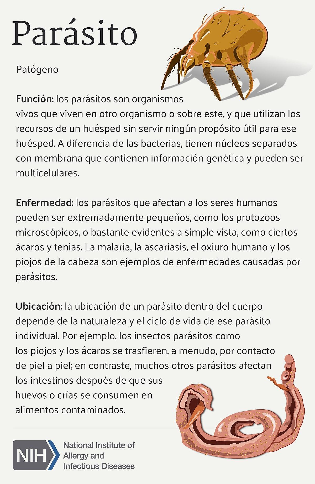 bacterias que viven en la piel humana
