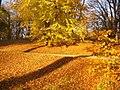 Park Babelsberg - Goldener Herbst (Golden Autumn) - geo.hlipp.de - 30256.jpg