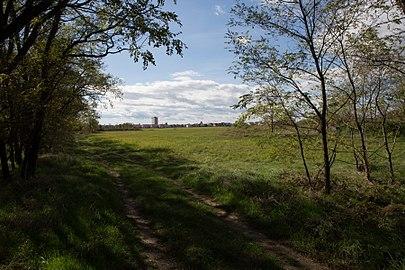 Parndorfer Heide NSG20 014.jpg