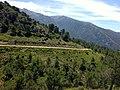 Parque Natural Sierra de Tejeda, Almijara y Alhama (8730650421).jpg