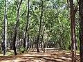 Parque do Rio Vermelho - Reflorestamento.JPG