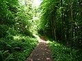 Path in Nicholaston Woods, near Oxwich - geograph.org.uk - 2417056.jpg