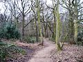 Path through Stony Cliffe Wood - geograph.org.uk - 1136938.jpg