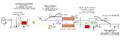 Peak rail signal diagram.png