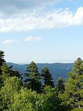 Photographie de pins de Macédoine dans le parc du Pelister