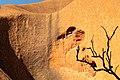 Petermann Ranges (AU), Uluru-Kata Tjuta National Park, Uluru, Kuniya Walk -- 2019 -- 3646.jpg