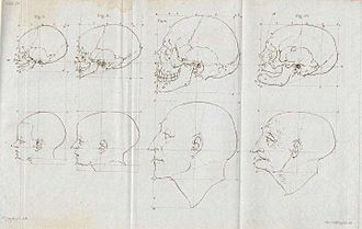 Facial Angles (Camper) - Image: Petrus Camper facial angles by son Adriaan Gilles baby to old man