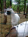 Petting Zoo - panoramio.jpg