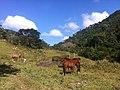 Pferd - panoramio (1).jpg