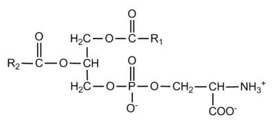 Resultado de imagem para fosfatidilserina