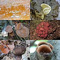 Photocollage of our biking trip at Planken Wambuis with unidentified mushrooms. Just enjoying the colours and the shape - panoramio.jpg
