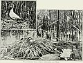 Pictures of bird life - on woodland meadow, mountain and marsh (1903) (14563606290).jpg