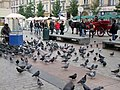 Pidgeons on the Market Place (Rynek Glówny) - panoramio.jpg