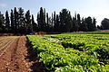PikiWiki Israel 39946 Agriculture in Israel.JPG