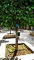 PikiWiki Israel 76251 presidential garden ramla.jpg