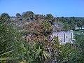 Pinellas County, FL, USA - panoramio (3).jpg