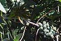 PlantTlaxcala.JPG